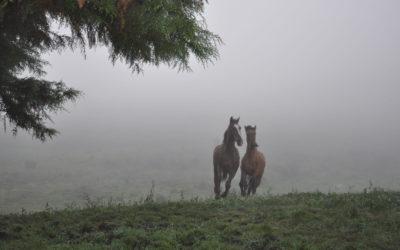 Cavalgada Irmãos do Estribo – São Francisco de Paula – 2010